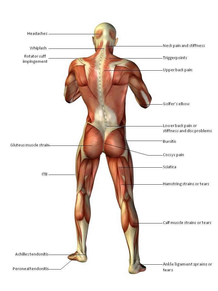 Body chart back