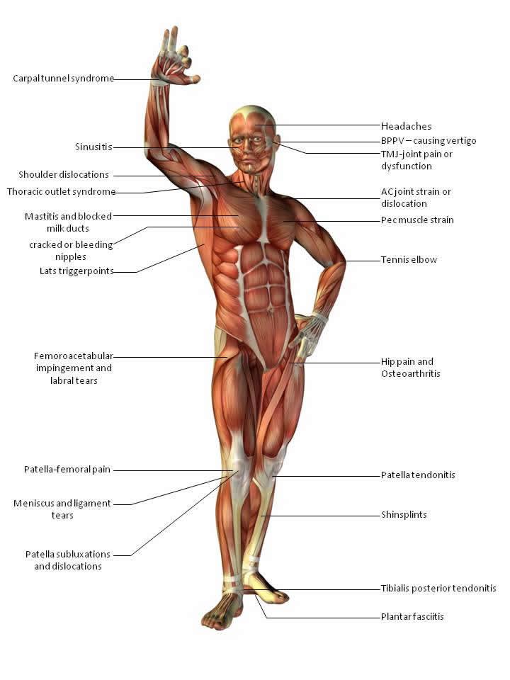 Body chart front